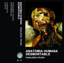 ANATOMIA HUMANA DESMONTABLE