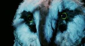 03/10/2014 : MICHELE SOAVI - Stage Fright