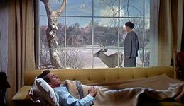 19/06/2015 : DOUGLAS SIRK - All That Heaven Allows
