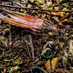 02/02/2021 : JOHN 3:16 - I regularly come across animal remains at various stages of decomposition. That started to affect me, and that's where the concept of the record was born.