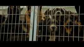 22/10/2014 : KORNEL MUNDRUCZO - White God (FilmFest Ghent 2014)