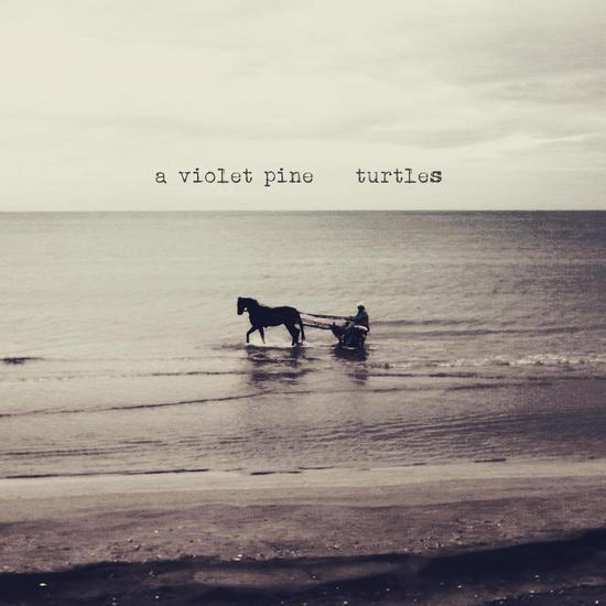 16/11/2015 : A VIOLET PINE - Turtles