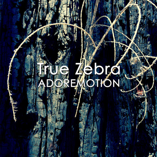 09/11/2014 : TRUE ZEBRA - Adoremotion