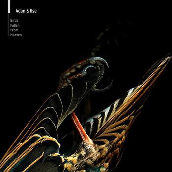 09/07/2014 : ADAN & ILSE - Birds fall from heaven