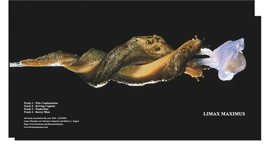 11/08/2014 : LIMAX MAXIMUS -
