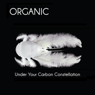 25/11/2012 : ORGANIC - Under Your Carbon Constellation