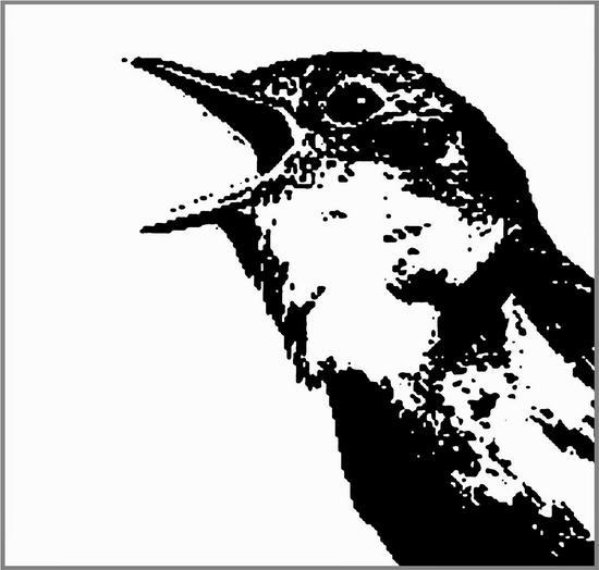 14/12/2014 : VARIOUS ARTISTS - Nightingale Variations