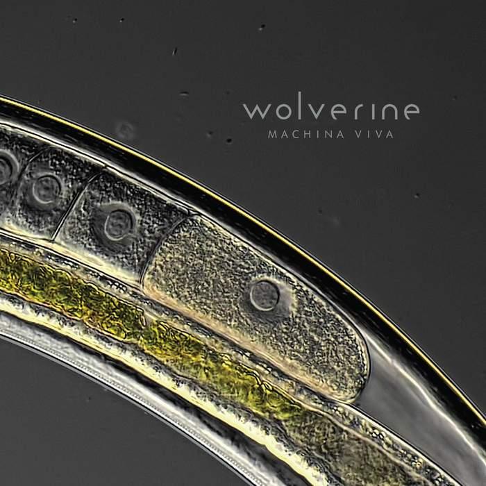 11/12/2016 : WOLVERINE - Machina Viva