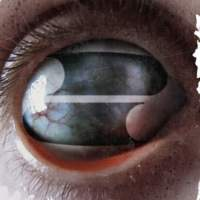 CD FILTER Crazy Eyes