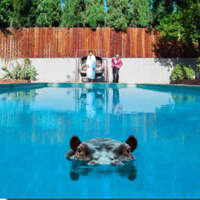 CD SPARKS Hippopotamus