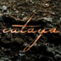 CD CATAYA Sukzession
